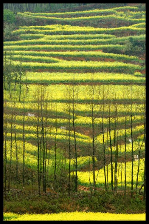 Voyage Chine - Shillin : Au-delà de la forêt de pierre, au-delà de l'orient… l'occident 9