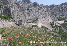 Biokovo Nature, fleurs et route