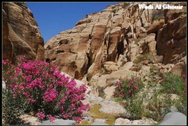 Wadi Al Ghouir