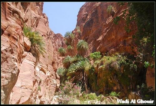 wadi al Ghouir Canyon (7)