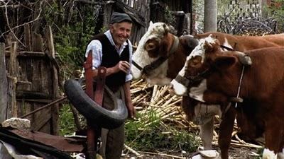 Serbie village homme et ses vaches