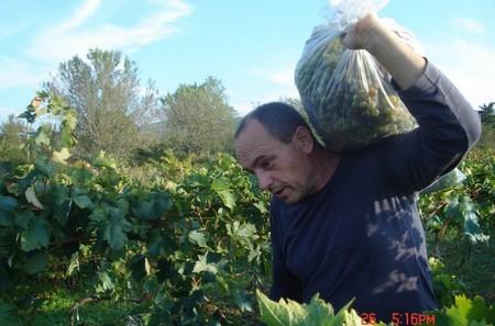 Vendanges - Agroturizam Kalpic