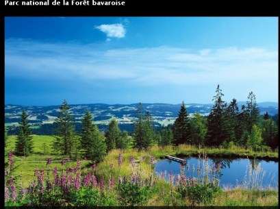 Parc national Foret Bavaroise