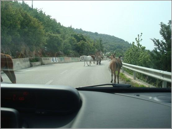Albanie chevaux