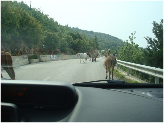Albanie chevaux Voyage de lItalie aux Balkans (Slovénie, Croatie, Serbie, Macédoine, Albanie)