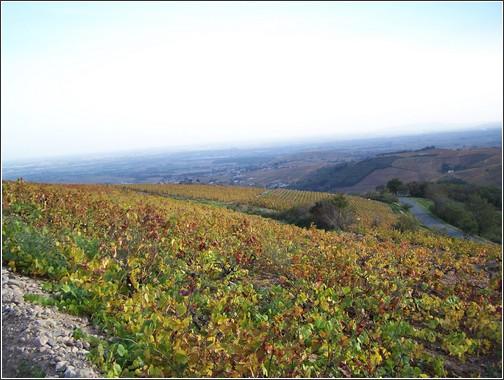 Beaujolais vignobles