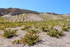 Cyclades : Sifnos, Santorini, Koufonisi, Ios et Amorgos (Vacances Grece) 6
