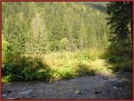 Retezat forets parc national roumanie