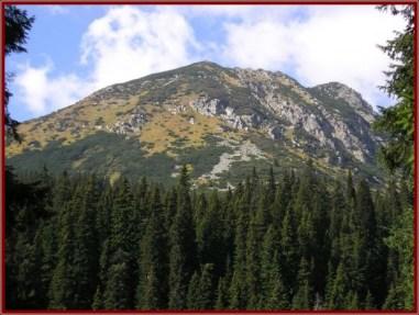 Retezat montagne foret sapins