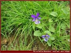 Retezat parc national roumanie fleurs sauvages