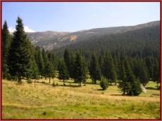 parc national retezat foret de sapins
