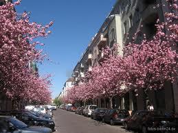 Rue hufeland botzowviertel