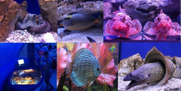 aquarium sibenik croatie