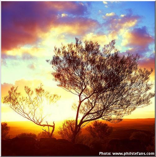 broken hill arbre coucher de soleil