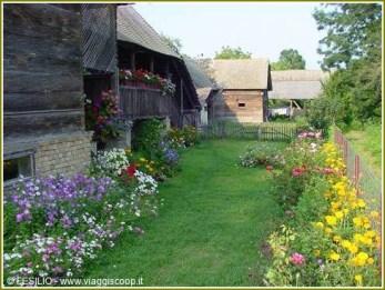 lonjsko polje fleurs
