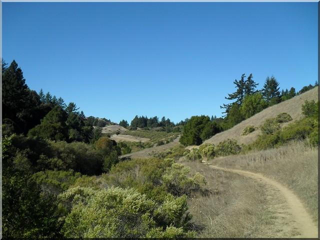 Long Ridge Open Space Preserve sentier