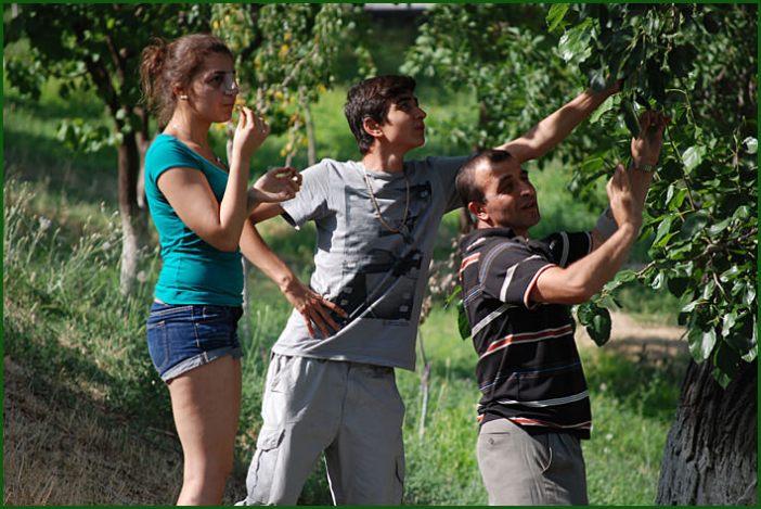 Famille en Arménie cueillette sur un arbre