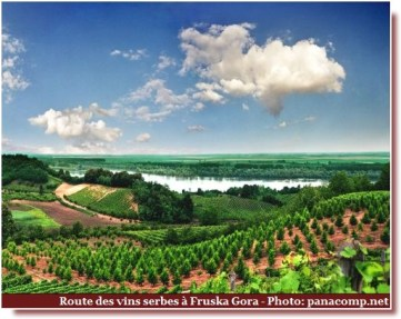 Fruska Gora route des vins serbes