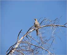 parc national cozia oiseau