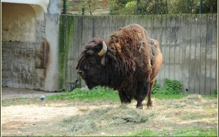 reserve bisons d'europe