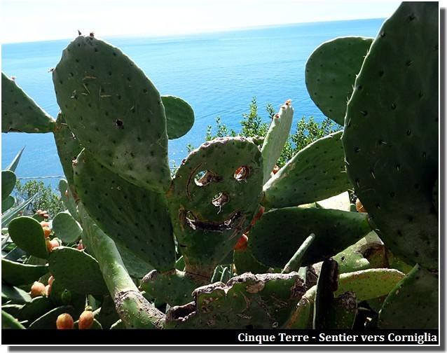 cinque terre sentier vers corniglia cactus sculpté
