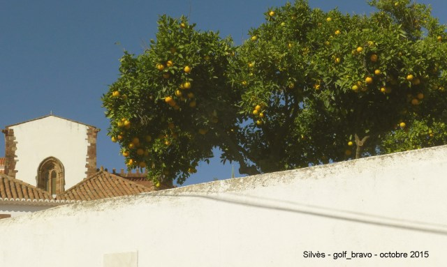 Orangers à Silvès