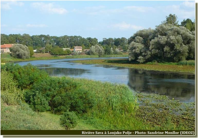 Lonjsko Polje Riviere Sava