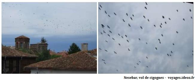 Vol de cigognes au dessus de Nesebar