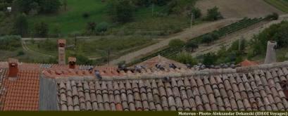 Motovun pigeons sur les toits