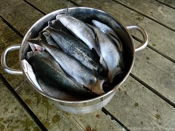 lofoten poissons fraichement péchés