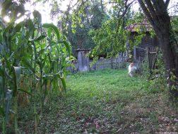 Arilje jardin à l'arrière de la maison de l'ermite (1)