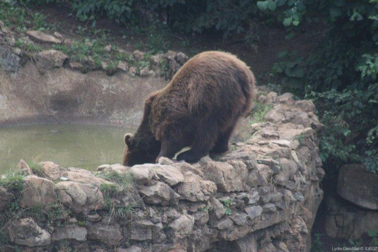 Refuge des ours de Kuterevo : rencontre avec les ours bruns de Croatie 3