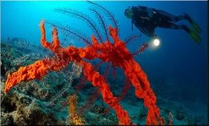 Où faire de la plongée en Croatie? Top 5 des meilleurs sites de plongée 1