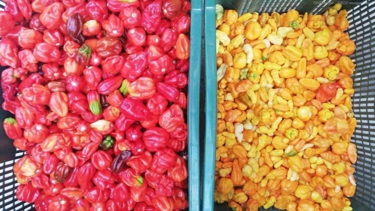 OPG Matulic, saveurs et délicieux produits culinaires et cosmétiques de l'île de Pasman 5