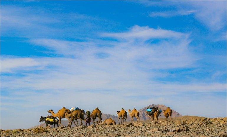 équipage de chameaux de nomades entre Saghro et le Haut Atlas