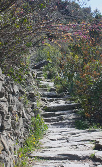 Cinque Terre, la Riviera Ligure du Levant (Voyage Italie) 29