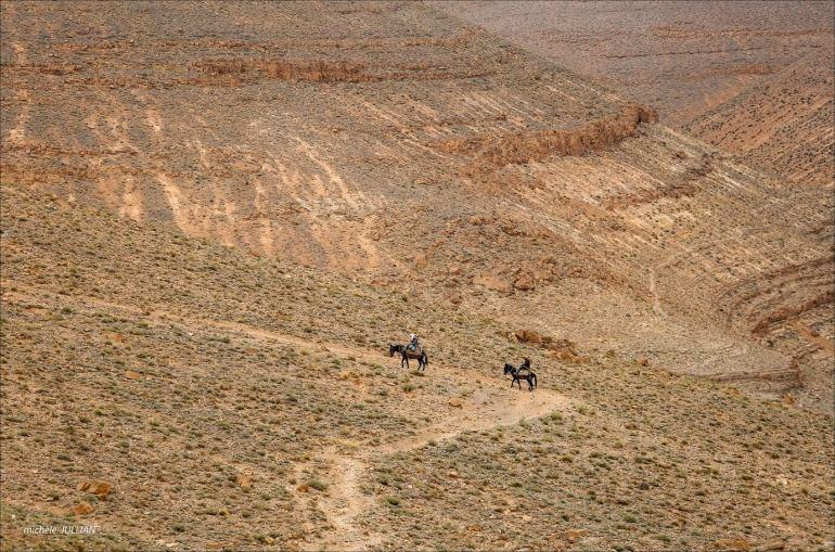 chevaux sur la route dans des paysages gigantesques du haut atlas marocain
