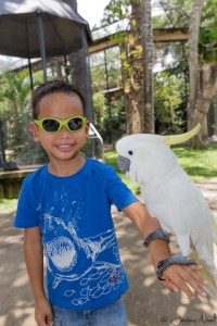 Bali Bird Park - Thomas cacatoes