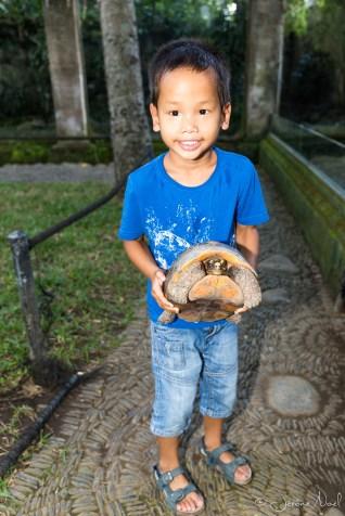 Bali Reptile Park - Thomas tortue