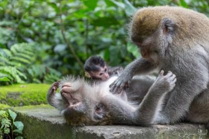 Monkey Forest - nettoyage
