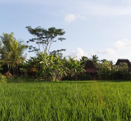 Panorama Hotel Ubud