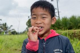 Jatiluwih - Luka libellules