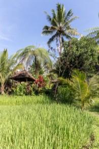 Penebel - bungalow