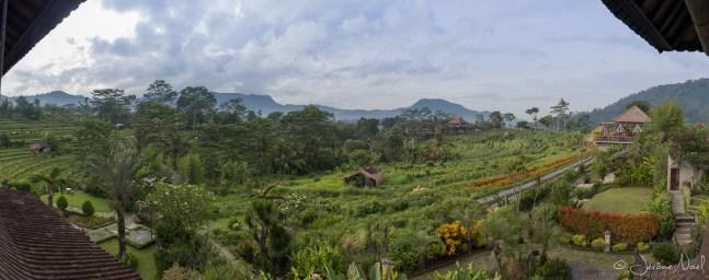 Sawah Indah - panorama matin