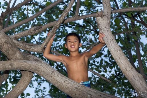 Taman Sari - Luka dans l'arbre