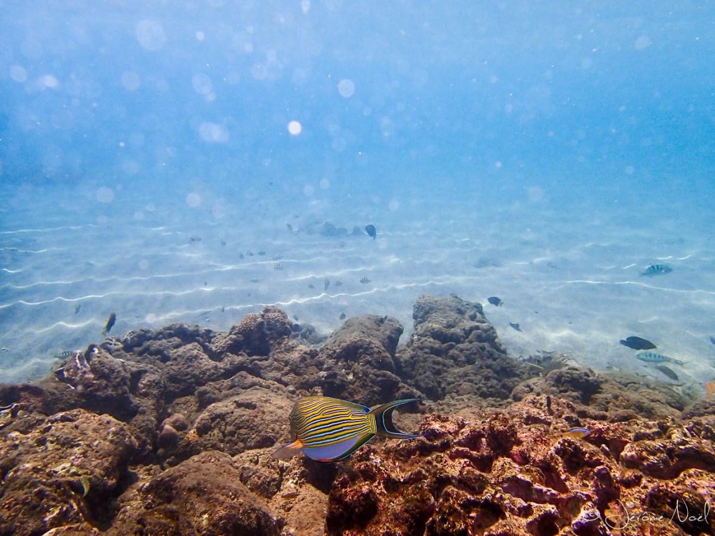 Taman Sari - snorkeling