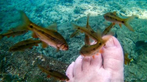 Siquijor - Balete Tree - Fish Spa, ça chatouille