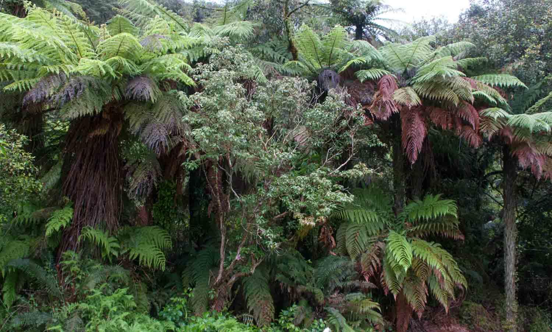 Haast, Ile du Sud, Nouvelle-Zélande