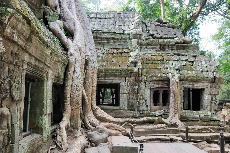 Ta Prohm, Angkor, Cambodge