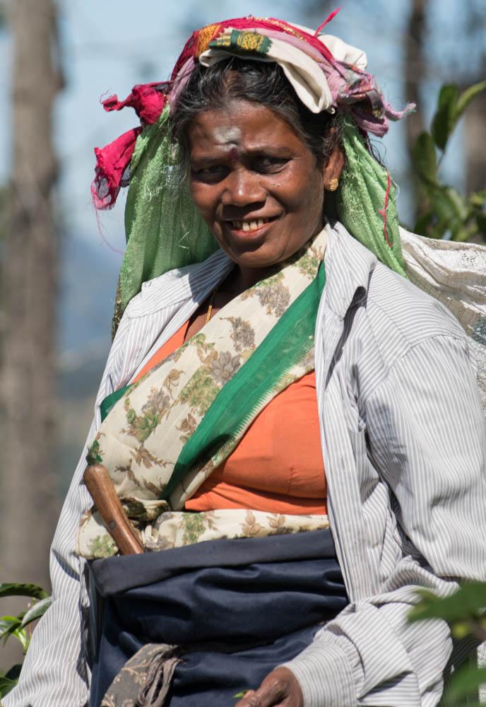 Plantations de thé, Ella, Sri Lanka